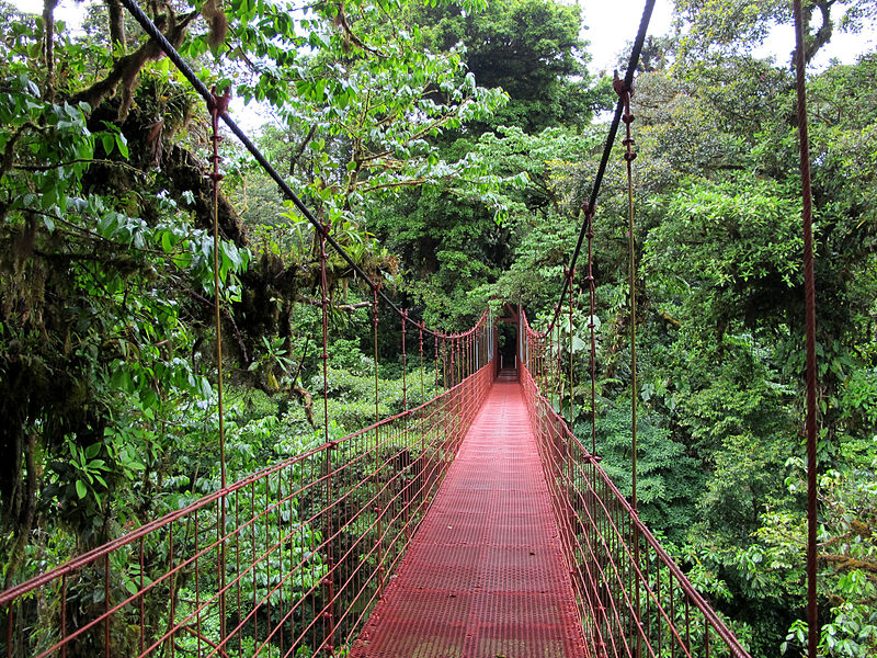 Monteverde Cloud Forest Reserve bridge